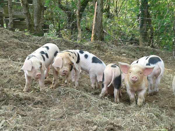 Meet the farm animals during your stay at Lower Hearson Farm.