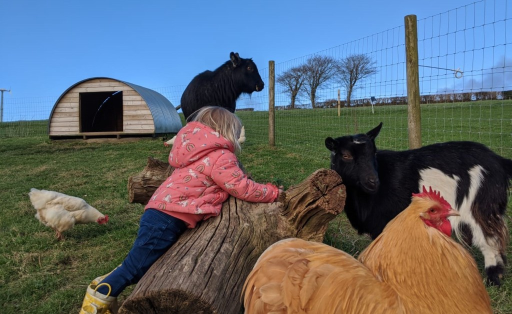 Meet the animals at Bampfield Farm.