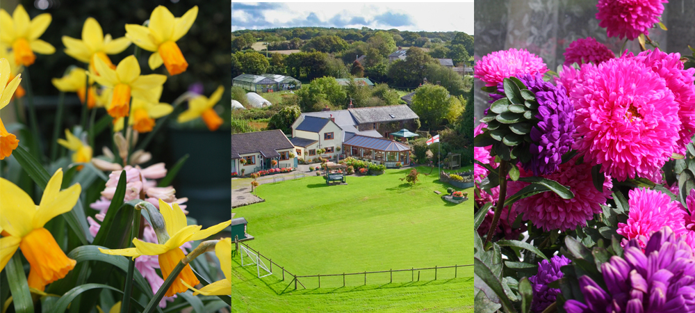 A variety of summer flowers can be enjoyed at West Down Guest House.