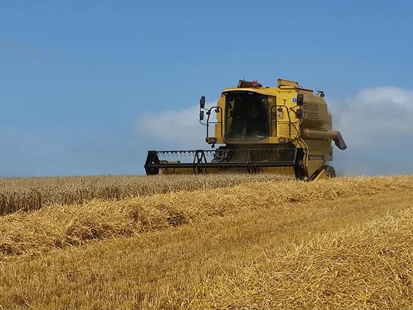 Harvesting season at Week Farm Self Catering, North Devon.