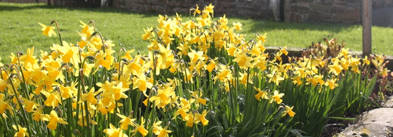 The flowers are shinning in North Devon this spring, the perfect destination for a holiday in the UK.