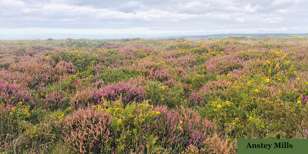 Explore the beautiful moorland of Exmoor and Dartmoor while on holiday in Devon.