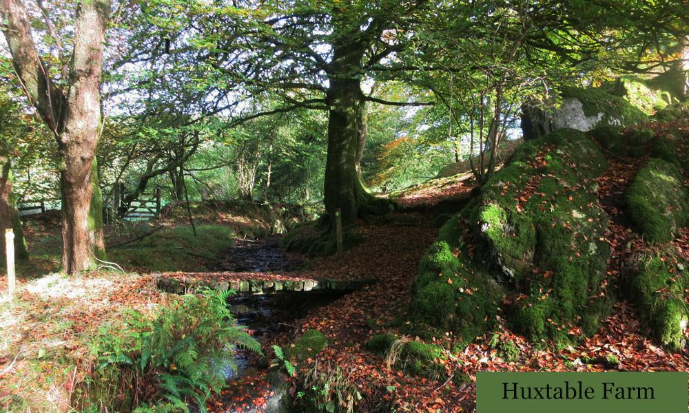 Enjoy the feeling of crisp leaves underfoot on autumn walks in North Devon.
