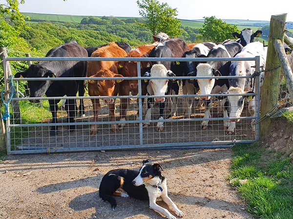 North Devon Farm Holidays provides you with the opportunity to explore the farms and meet the animals.