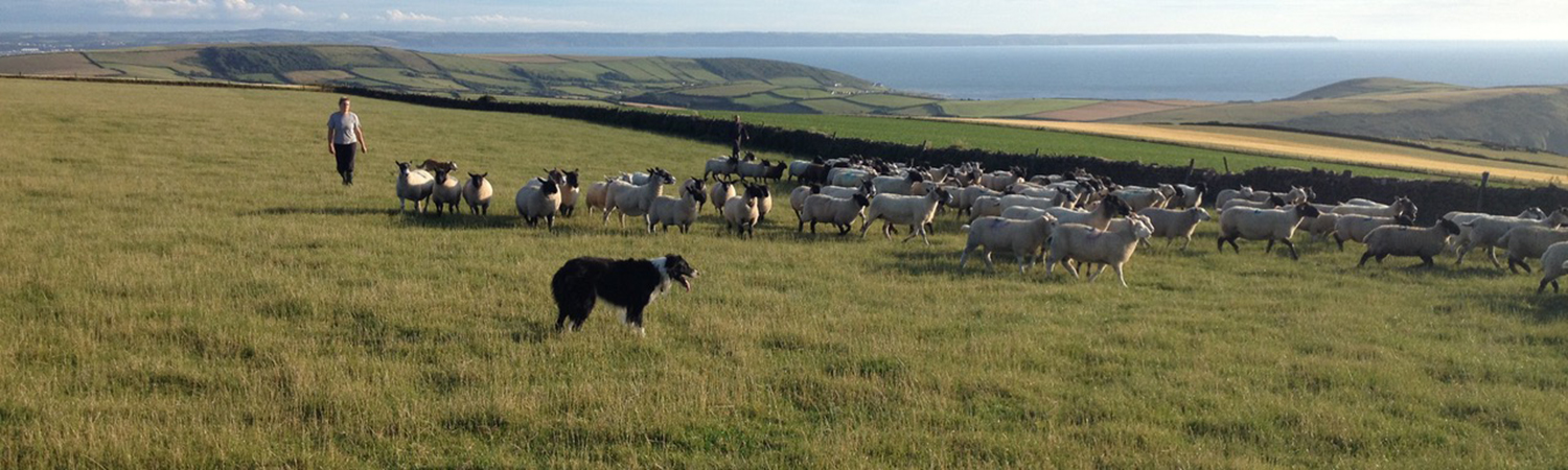 Stay on a farm with North Devon Farm Holidays and enjoy an authentic country holiday.