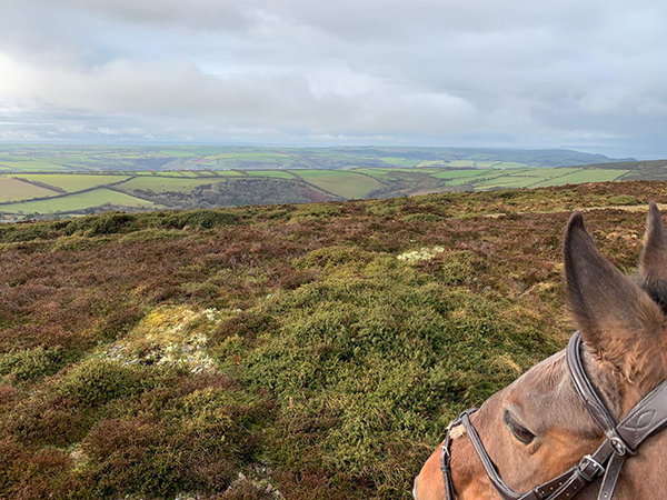 Enjoy the outstanding views of Exmoor with your horse at Hollacombe Farm Horse Riding Holidays.