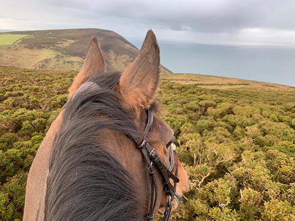 Take your horse on holiday with you at Hollacombe Holiday Cottage.
