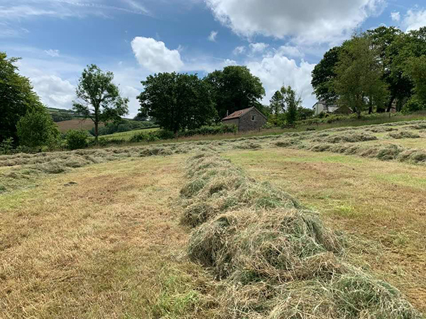 Hay making at The Red Linhay, Hollacombe Farm in North Devon.
